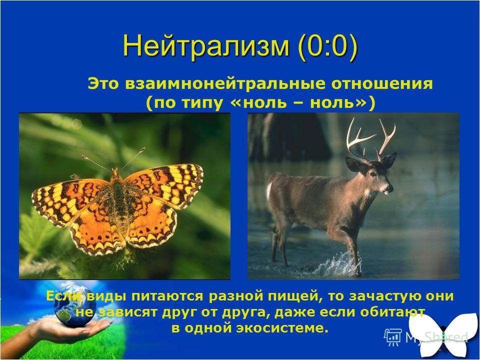Нейтрализм (0:0) Это взаимнонейтральные отношения (по типу «ноль – ноль») Если виды питаются разной пищей, то зачастую они не зависят друг от друга, даже если обитают в одной экосистеме.