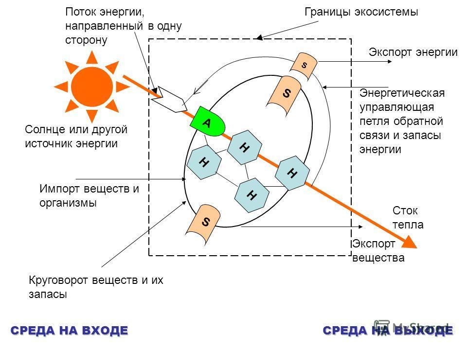 Границы экосистемы Солнце или другой источник энергии Поток энергии, направленный в одну сторону А SS S H H H H Сток тепла Экспорт вещества Импорт веществ и организмы Круговорот веществ и их запасы Энергетическая управляющая петля обратной связи и за