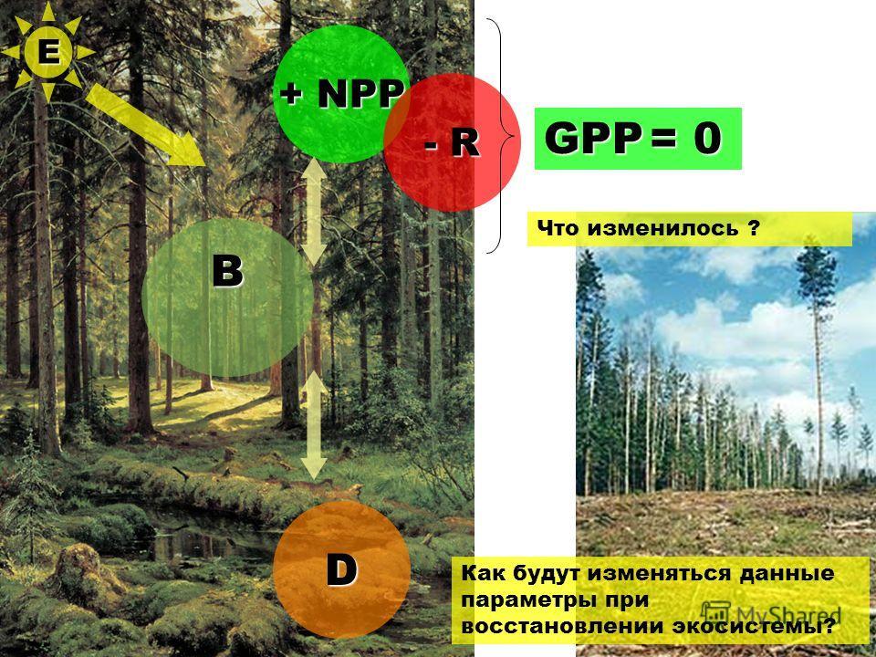 B + NPP - R D Как будут изменяться данные параметры при восстановлении экосистемы? GPP = 0 Е Что изменилось ?