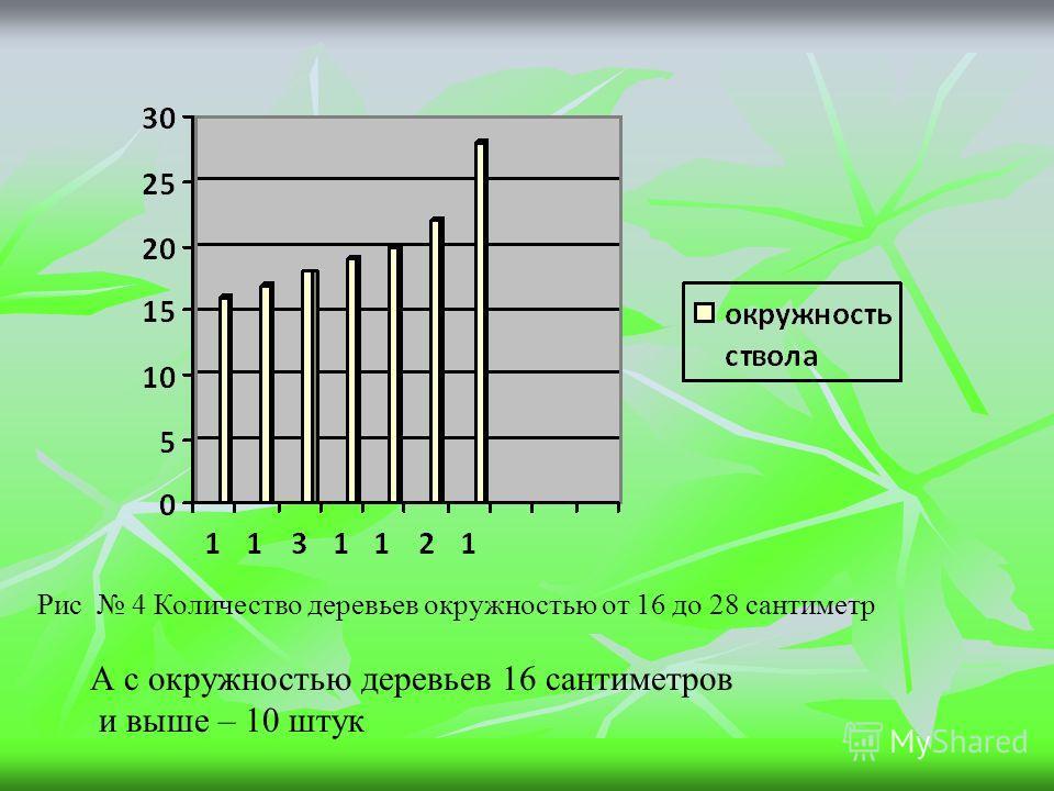 Рис 4 Количество деревьев окружностью от 16 до 28 сантиметр А с окружностью деревьев 16 сантиметров и выше – 10 штук