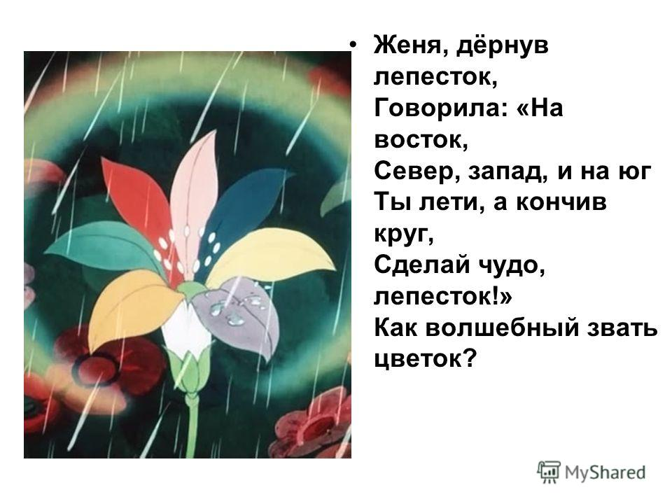 Женя, дёрнув лепесток, Говорила: «На восток, Север, запад, и на юг Ты лети, а кончив круг, Сделай чудо, лепесток!» Как волшебный звать цветок?