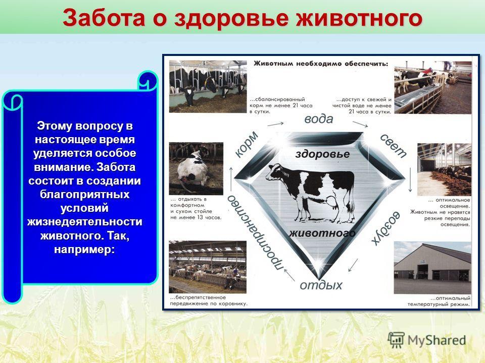 Забота о здоровье животного Этому вопросу в настоящее время уделяется особое внимание. Забота состоит в создании благоприятных условий жизнедеятельности животного. Так, например: