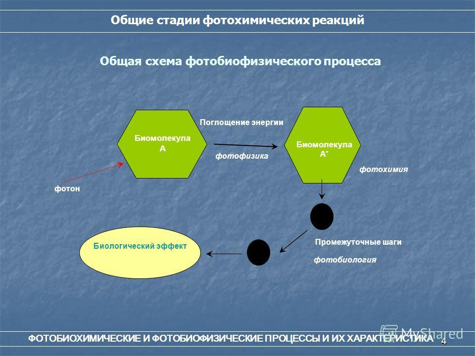 4 Общие стадии фотохимических реакций Общая схема фотобиофизического процесса Промежуточные шаги фотобиология фотохимия Биомолекула А* фотон Поглощение энергии фотофизика Биомолекула А Биологический эффект