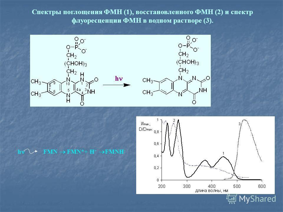 Спектры поглощения ФМН (1), восстановленного ФМН (2) и спектр флуоресценции ФМН в водном растворе (3). h FMN FMN*+ Н + FMNH - h