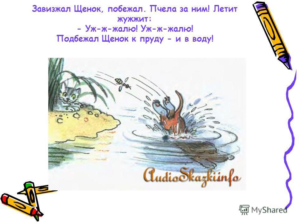 Завизжал Щенок, побежал. Пчела за ним! Летит жужжит: - Уж-ж-жалю! Уж-ж-жалю! Подбежал Щенок к пруду - и в воду!