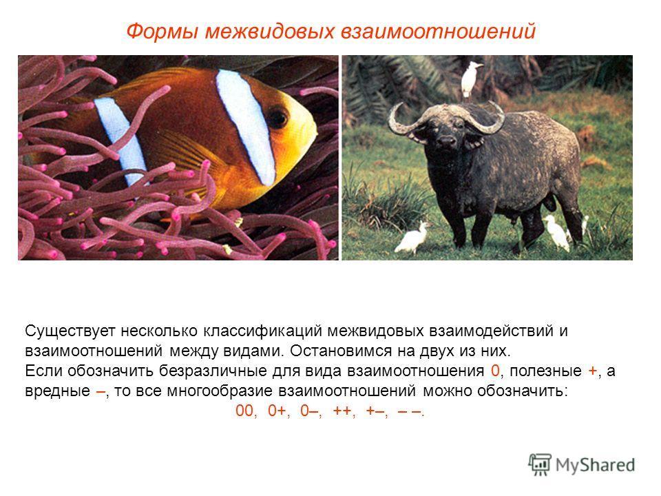 Существует несколько классификаций межвидовых взаимодействий и взаимоотношений между видами. Остановимся на двух из них. Если обозначить безразличные для вида взаимоотношения 0, полезные +, а вредные –, то все многообразие взаимоотношений можно обозн