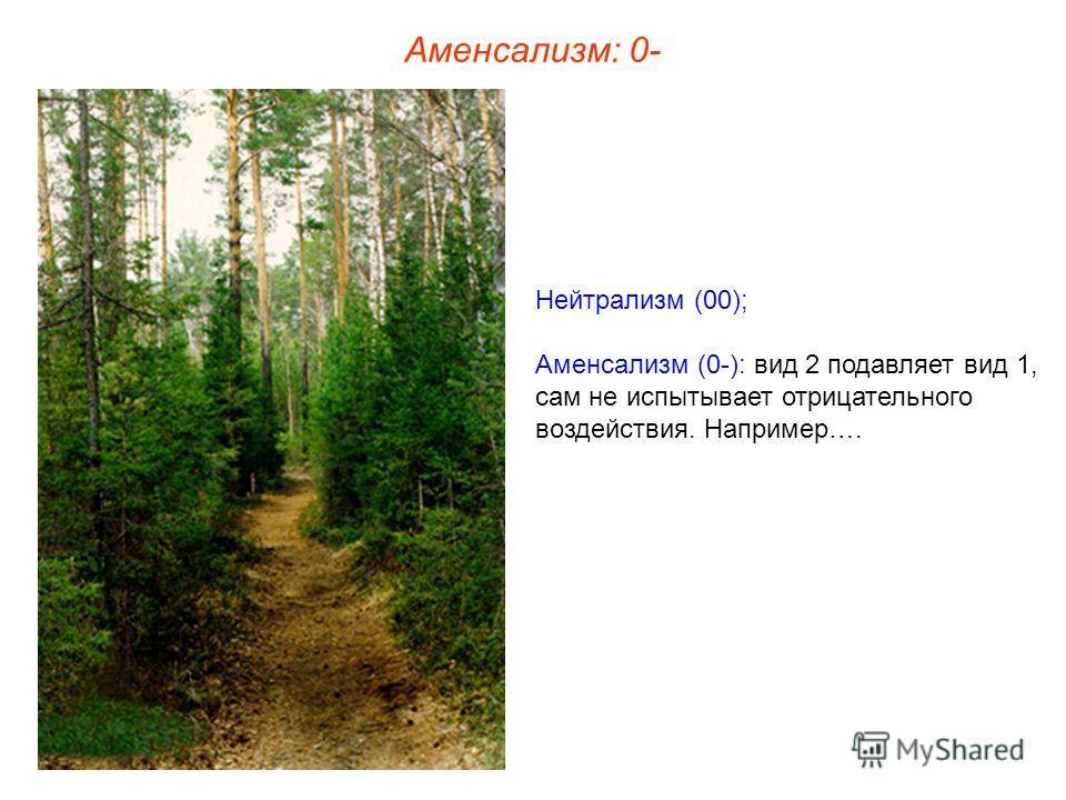 Нейтрализм (00); Аменсализм (0-): вид 2 подавляет вид 1, сам не испытывает отрицательного воздействия. Например…. Аменсализм: 0-