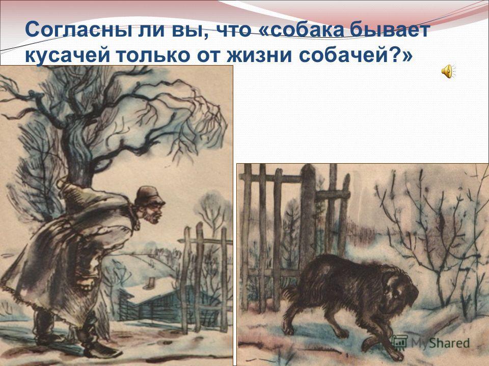 Согласны ли вы, что «собака бывает кусачей только от жизни собачей?»