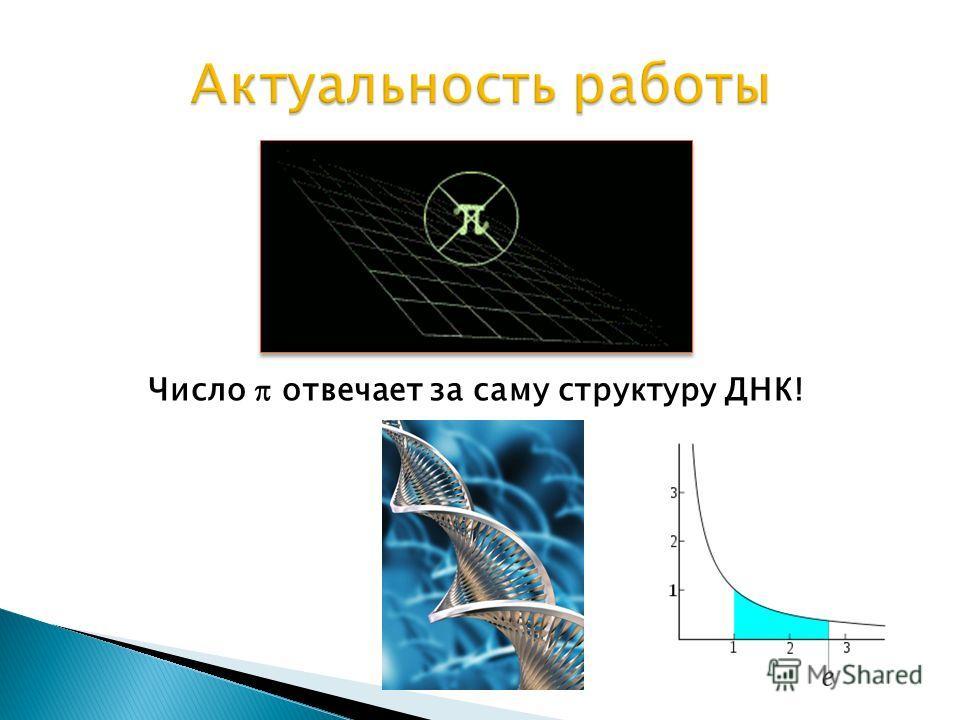 Число отвечает за саму структуру ДНК!