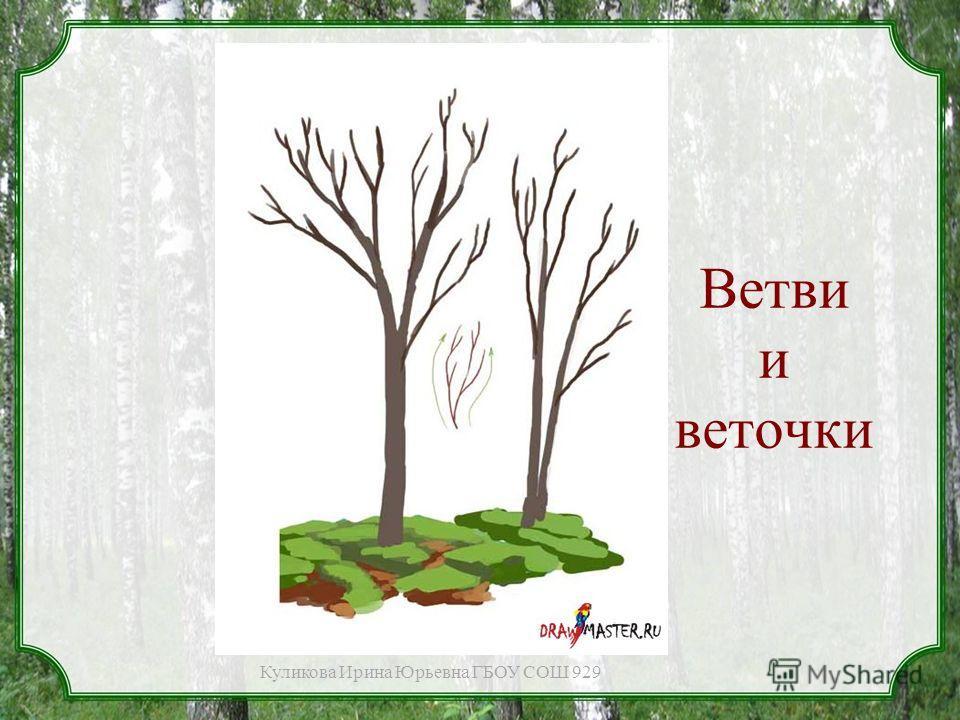 Ветви и веточки Куликова Ирина Юрьевна ГБОУ СОШ 929