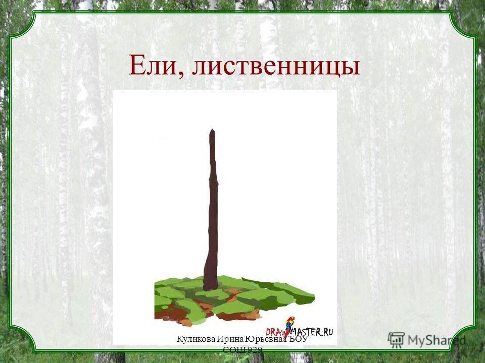 Ели, лиственницы Куликова Ирина Юрьевна ГБОУ СОШ 929