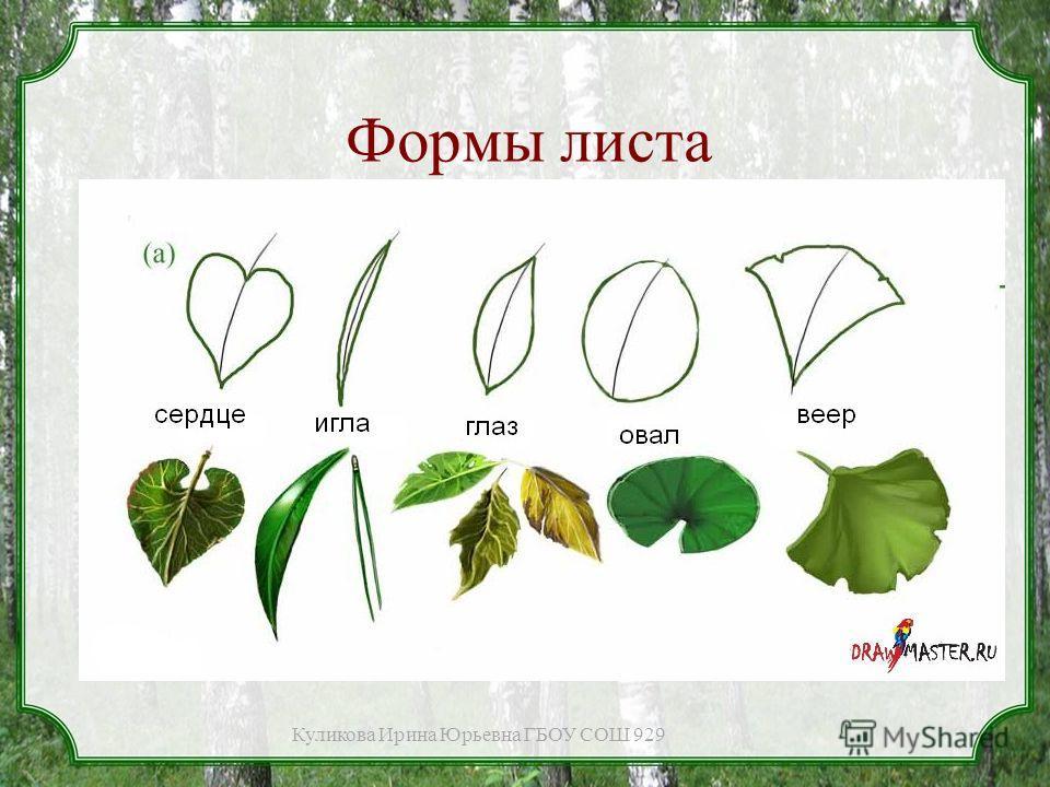 Формы листа Куликова Ирина Юрьевна ГБОУ СОШ 929