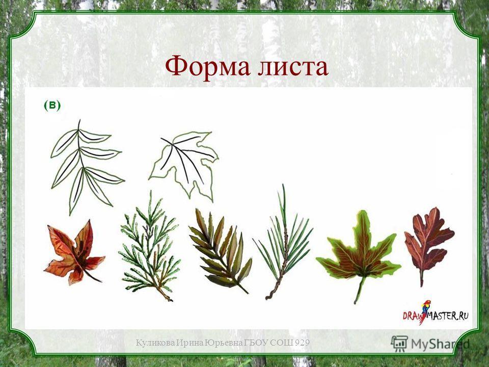 Форма листа Куликова Ирина Юрьевна ГБОУ СОШ 929