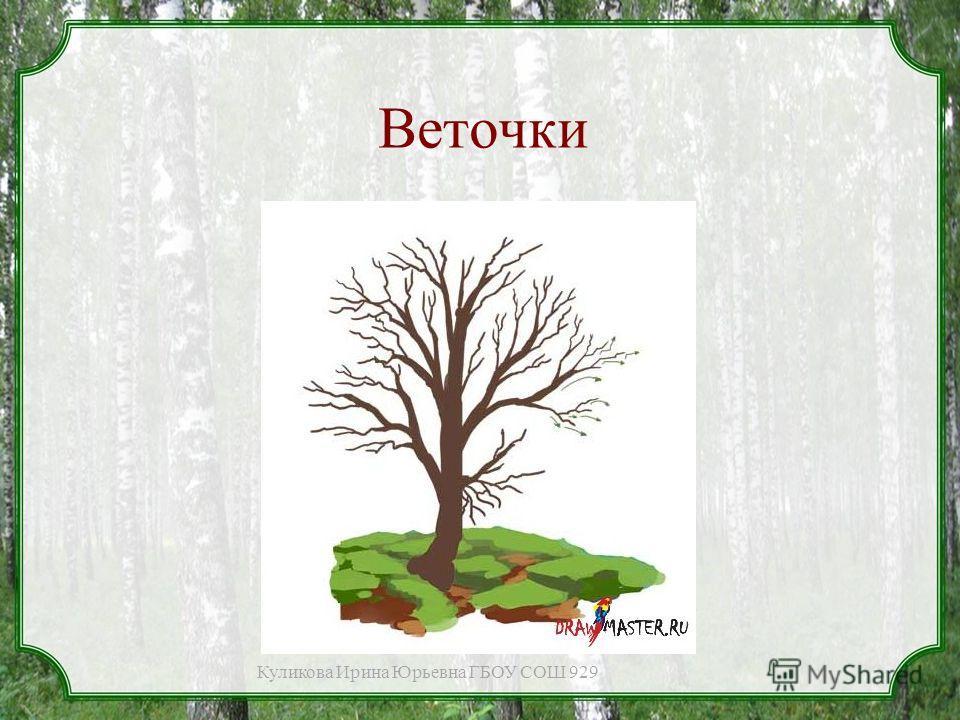 Веточки Куликова Ирина Юрьевна ГБОУ СОШ 929