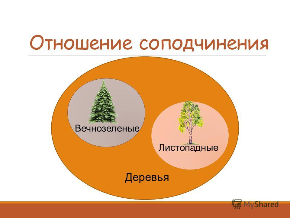 Отношение соподчинения Деревья Вечнозеленые Листопадные