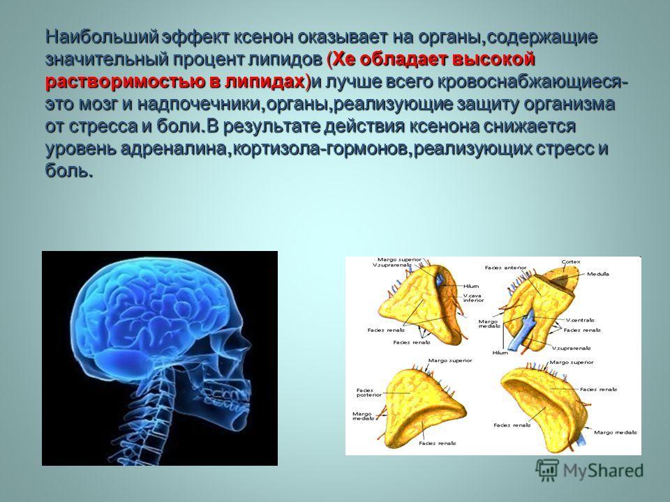 Наибольший эффект ксенон оказывает на органы, содержащие значительный процент липидов (Xe обладает высокой растворимостью в липидах ) и лучше всего кровоснабжающиеся - это мозг и надпочечники, органы, реализующие защиту организма от стресса и боли. В