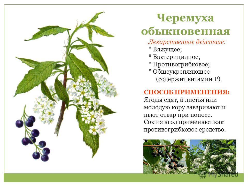 растения снижения холестерина