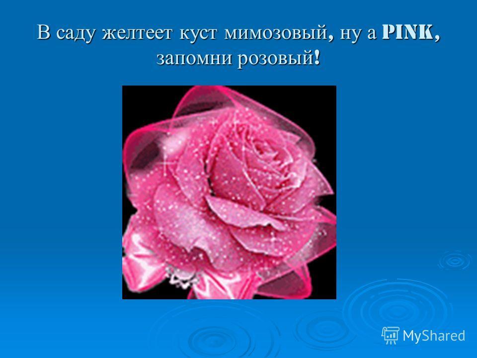 В саду желтеет куст мимозовый, ну а Pink, запомни розовый !