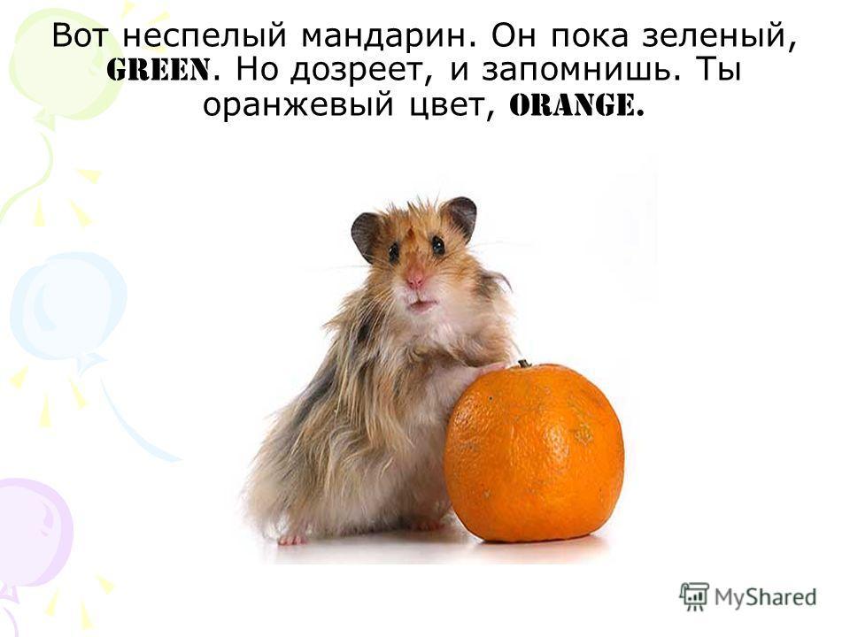 Вот неспелый мандарин. Он пока зеленый, green. Но дозреет, и запомнишь. Ты оранжевый цвет, orange.