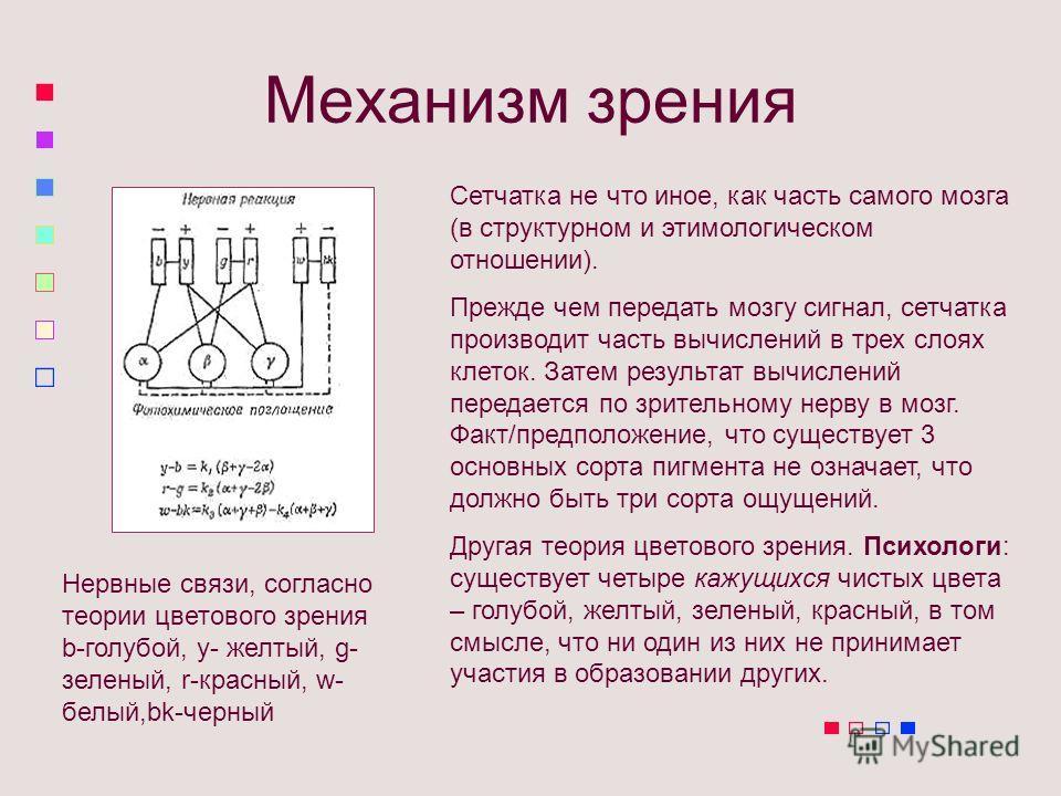 Механизм зрения Сетчатка не что иное, как часть самого мозга (в структурном и этимологическом отношении). Прежде чем передать мозгу сигнал, сетчатка производит часть вычислений в трех слоях клеток. Затем результат вычислений передается по зрительному