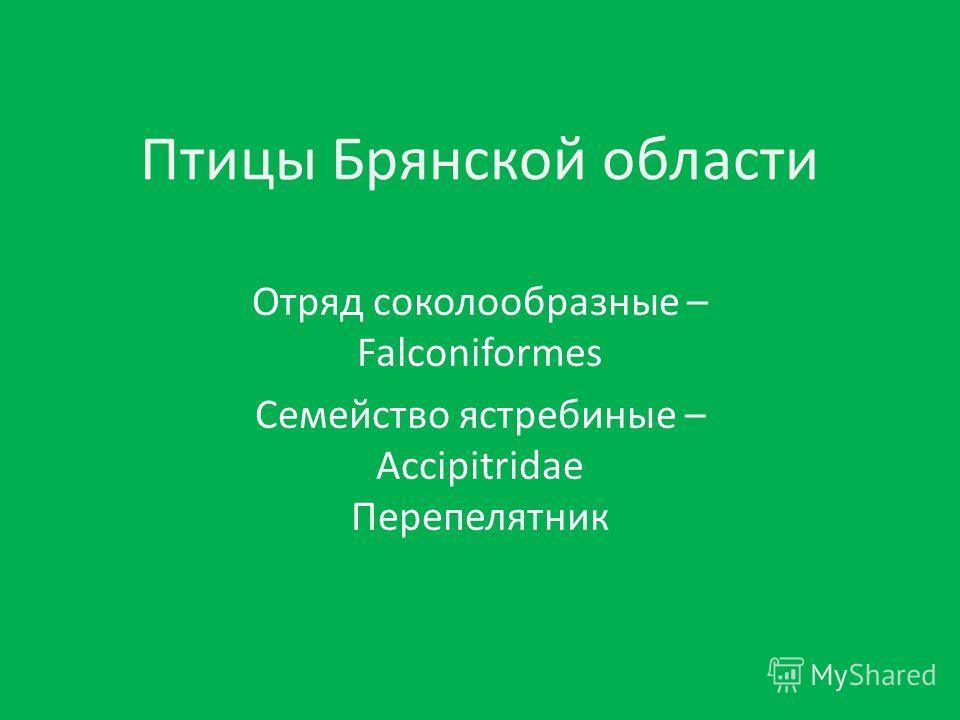 Птицы Брянской области Отряд соколообразные – Falconiformes Семейство ястребиные – Accipitridae Перепелятник