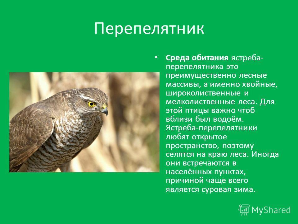 Перепелятник Среда обитания ястреба- перепелятника это преимущественно лесные массивы, а именно хвойные, широколиственные и мелколиственные леса. Для этой птицы важно чтоб вблизи был водоём. Ястреба-перепелятники любят открытое пространство, поэтому
