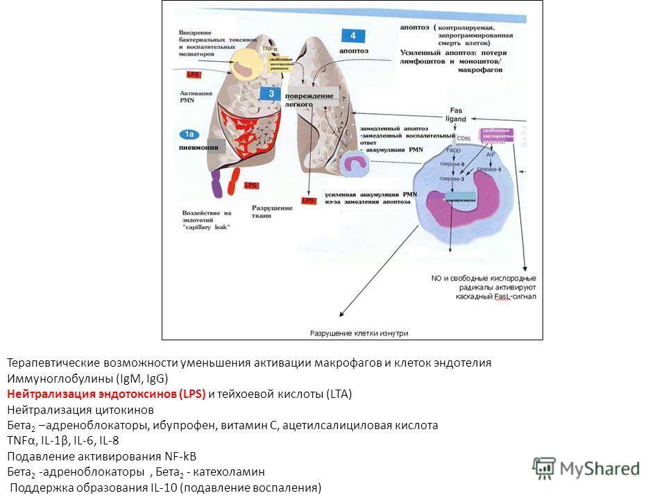 Терапевтические возможности уменьшения активации макрофагов и клеток эндотелия Иммуноглобулины (IgM, IgG) Нейтрализация эндотоксинов (LPS) и тейхоевой кислоты (LTA) Нейтрализация цитокинов Бета 2 –адреноблокаторы, ибупрофен, витамин С, ацетилсалицило