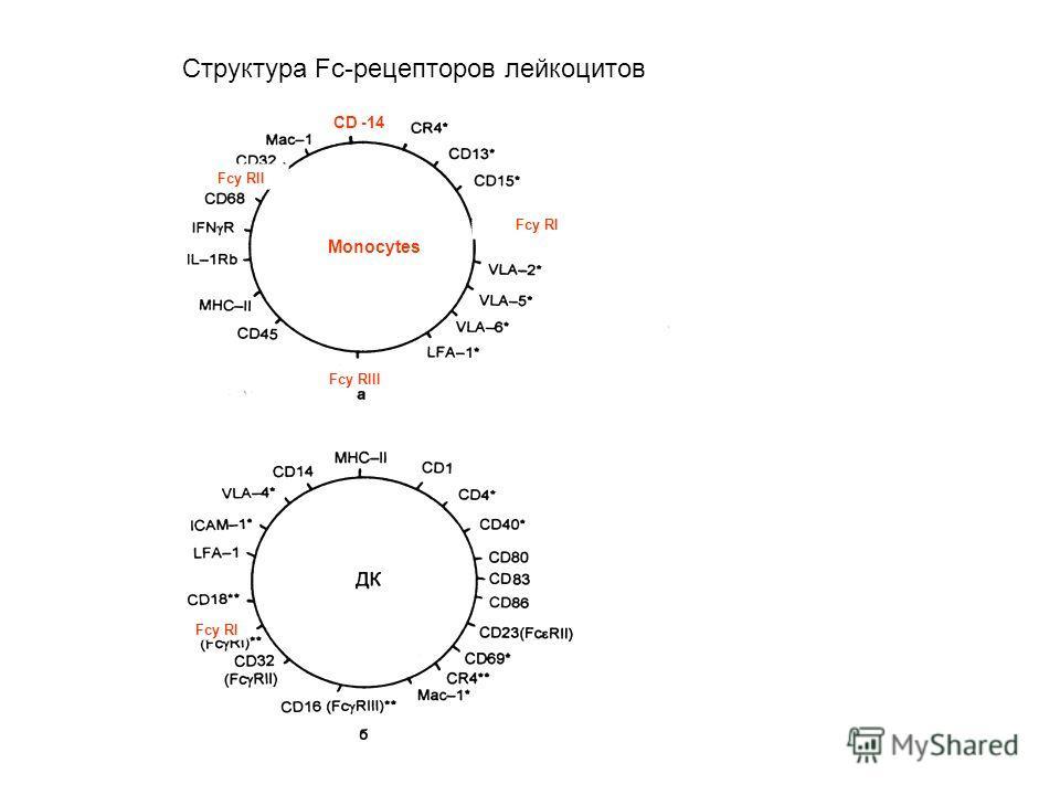 CD - 14 Fcy RI CD -14 Fcy RIII Fcy RI Fcy RII Структура Fc-рецепторов лейкоцитов Monocytes