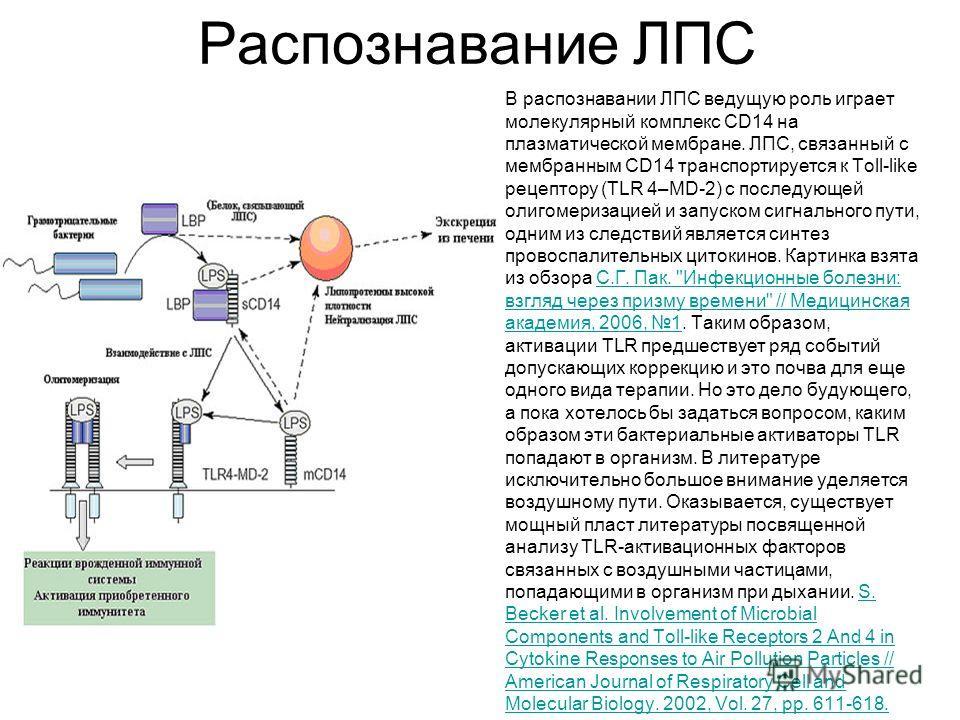 Распознавание ЛПС В распознавании ЛПС ведущую роль играет молекулярный комплекс CD14 на плазматической мембране. ЛПС, связанный с мембранным CD14 транспортируется к Toll-like рецептору (TLR 4–MD-2) с последующей олигомеризацией и запуском сигнального
