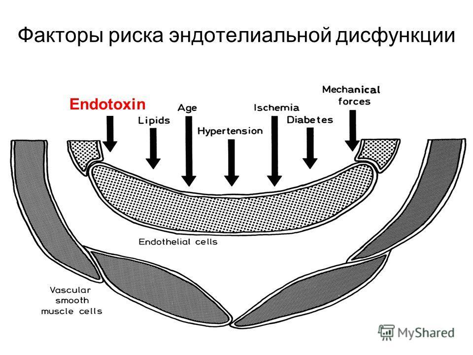 Факторы риска эндотелиальной дисфункции Endotoxin