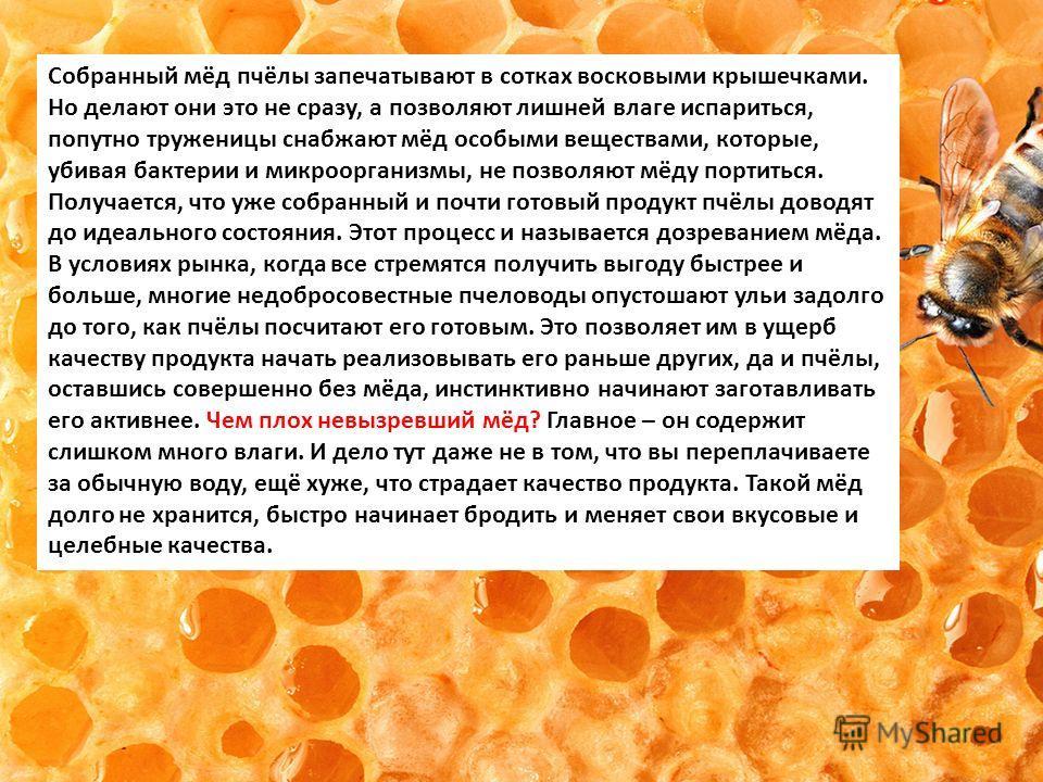 Собранный мёд пчёлы запечатывают в сотках восковыми крышечками. Но делают они это не сразу, а позволяют лишней влаге испариться, попутно труженицы снабжают мёд особыми веществами, которые, убивая бактерии и микроорганизмы, не позволяют мёду портиться