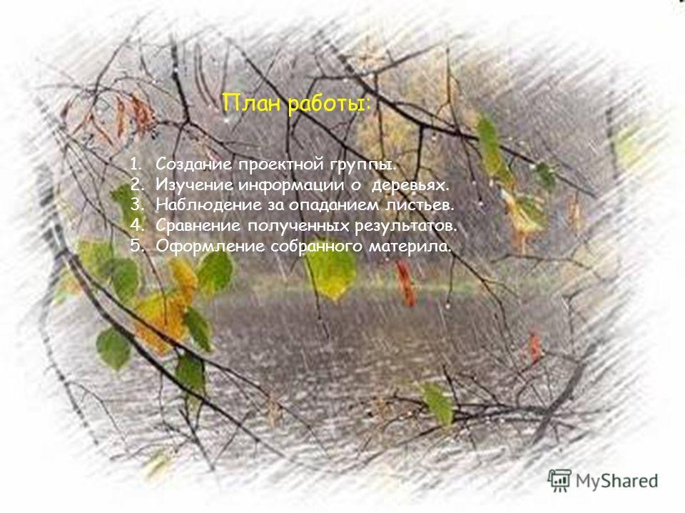 План работы: 1. Создание проектной группы. 2. Изучение информации о деревьях. 3. Наблюдение за опаданием листьев. 4. Сравнение полученных результатов. 5. Оформление собранного материла.