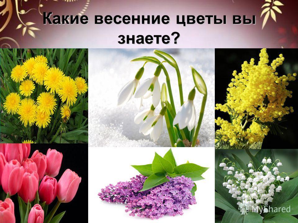 Какие весенние цветы вы знаете?