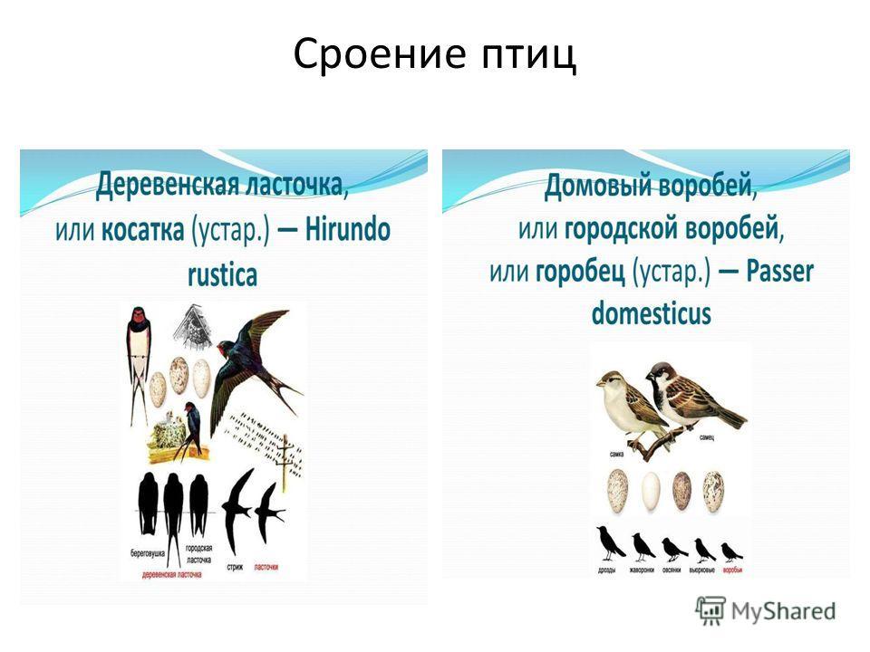 Сроение птиц