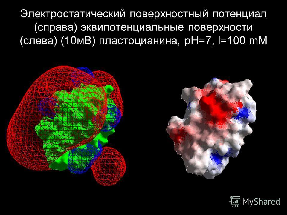Электростатический поверхностный потенциал (справа) эквипотенциальные поверхности (слева) (10 мВ) пластоцианина, pH=7, I=100 mM