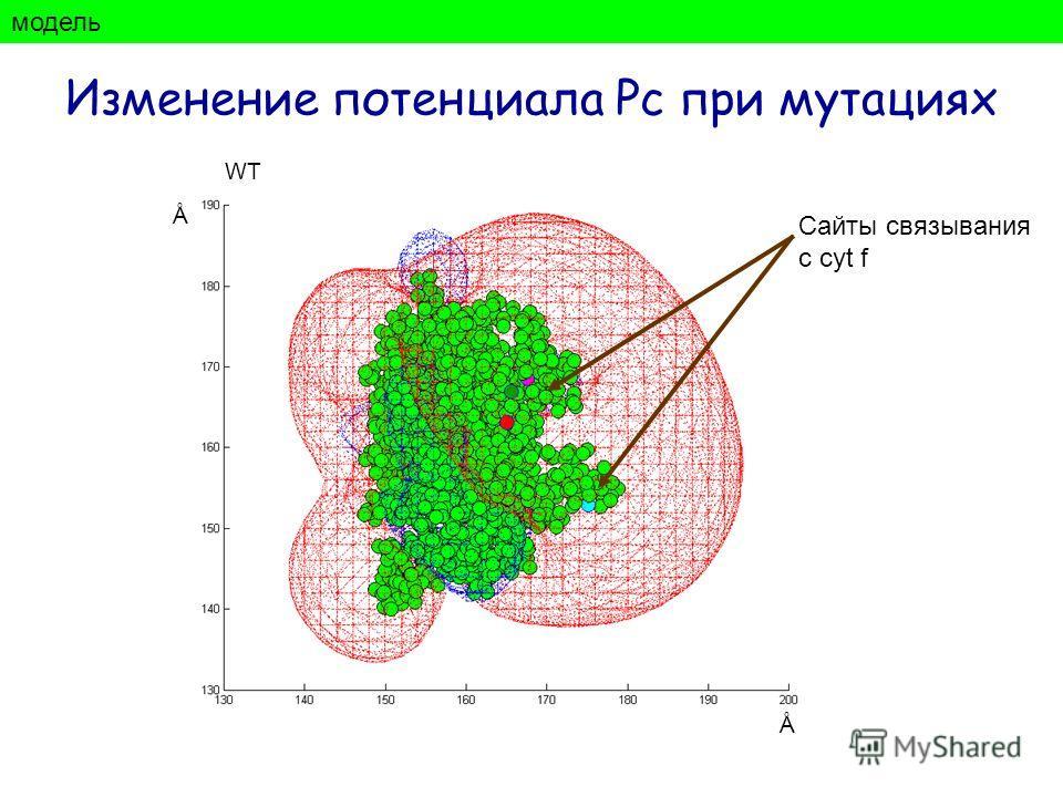 Изменение потенциала Рс при мутациях модель Ǻ Ǻ Сайты связывания с cyt f WT