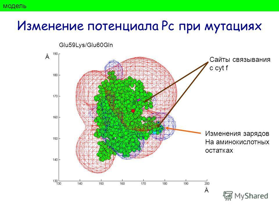 модель Изменение потенциала Рс при мутациях Изменения зарядов На аминокислотных остатках Ǻ Ǻ Сайты связывания с cyt f Glu59Lys/Glu60Gln