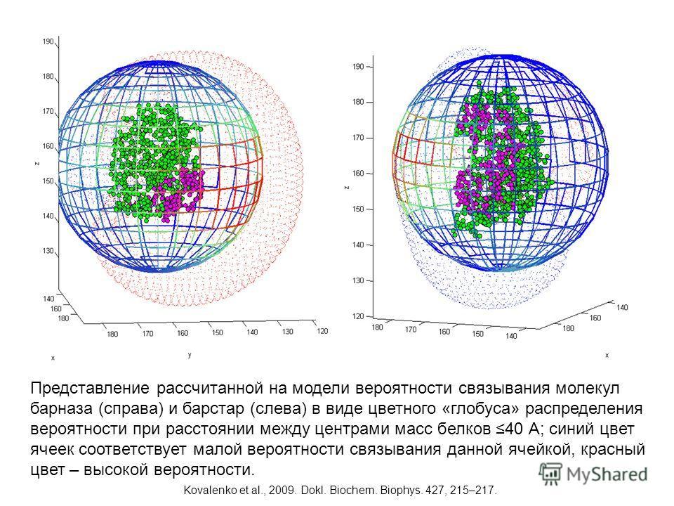 Представление рассчитанной на модели вероятности связывания молекул барназа (справа) и барстар (слева) в виде цветного «глобуса» распределения вероятности при расстоянии между центрами масс белков 40 А; синий цвет ячеек соответствует малой вероятност