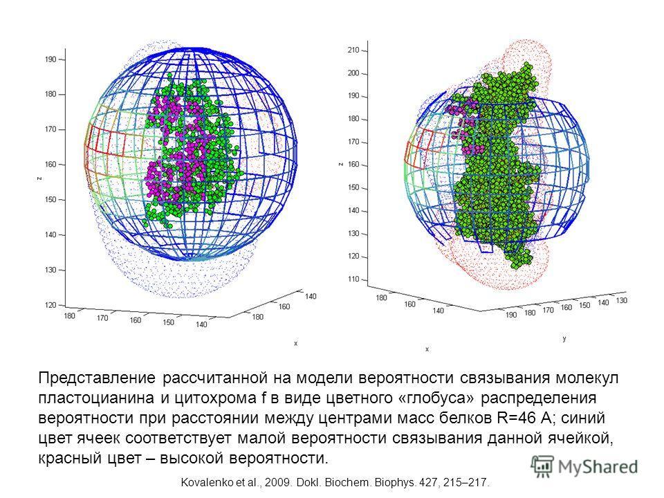 Представление рассчитанной на модели вероятности связывания молекул пластоцианина и цитохрома f в виде цветного «глобуса» распределения вероятности при расстоянии между центрами масс белков R=46 A; синий цвет ячеек соответствует малой вероятности свя
