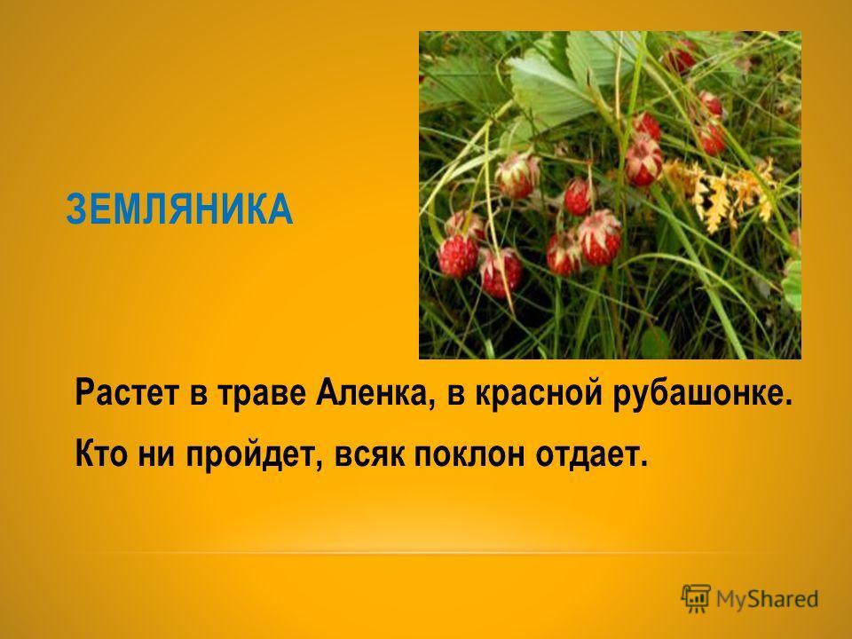 ЗЕМЛЯНИКА Растет в траве Аленка, в красной рубашонке. Кто ни пройдет, всяк поклон отдает.
