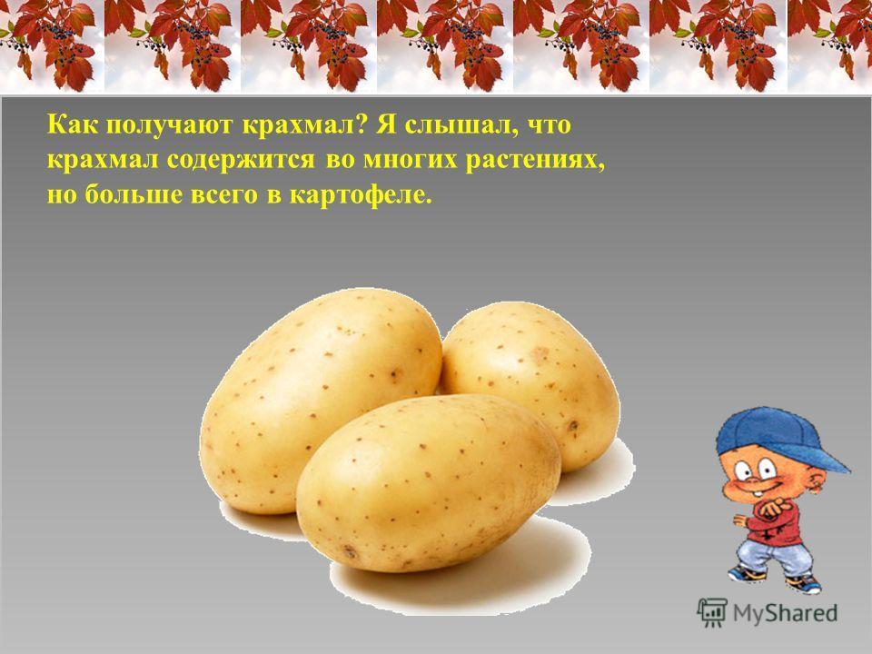 Как получают крахмал? Я слышал, что крахмал содержится во многих растениях, но больше всего в картофеле.