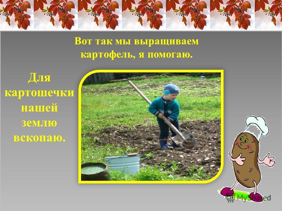 Для картошечки нашей землю вскопаю. Вот так мы выращиваем картофель, я помогаю.