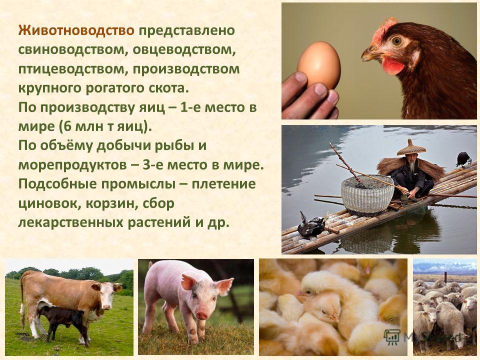 Животноводство представлено свиноводством, овцеводством, птицеводством, производством крупного рогатого скота. По производству яиц – 1-е место в мире (6 млн т яиц). По объёму добычи рыбы и морепродуктов – 3-е место в мире. Подсобные промыслы – плетен