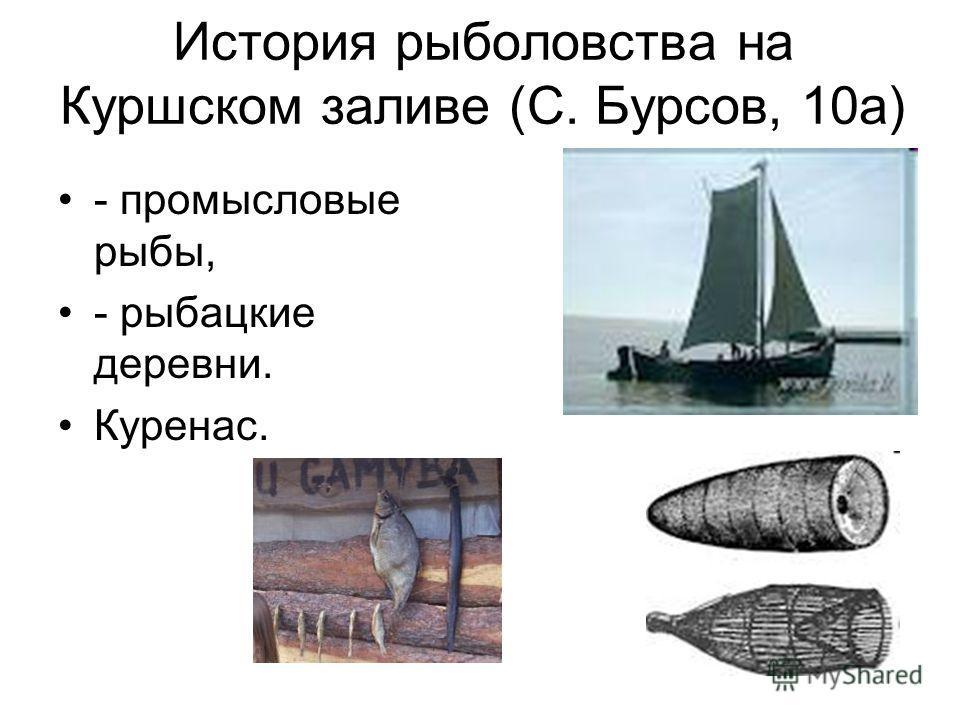 История рыболовства на Куршском заливе (С. Бурсов, 10 а) - промысловые рыбы, - рыбацкие деревни. Куренас.