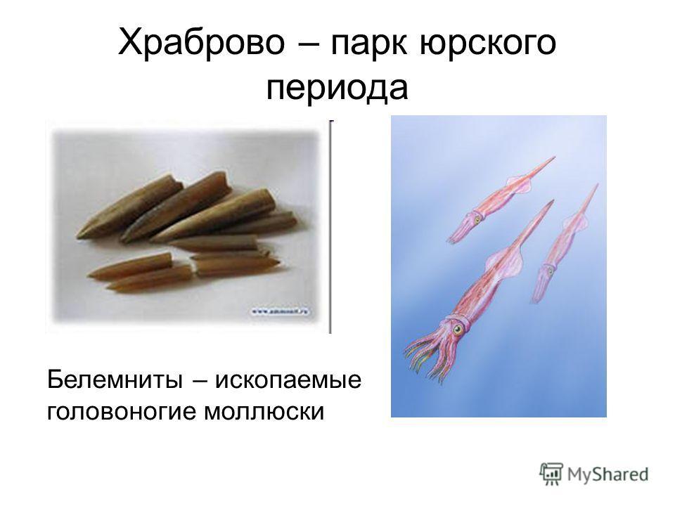 Храброво – парк юрского периода Белемниты – ископаемые головоногие моллюски