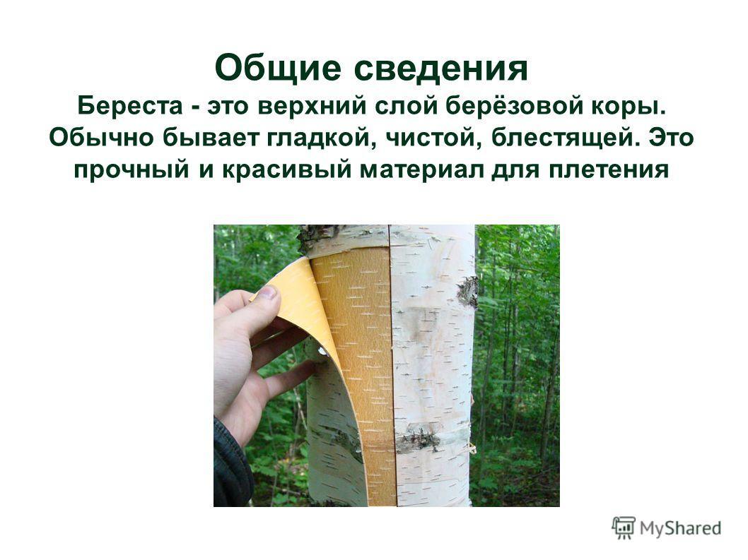 Общие сведения Береста - это верхний слой берёзовой коры. Обычно бывает гладкой, чистой, блестящей. Это прочный и красивый материал для плетения