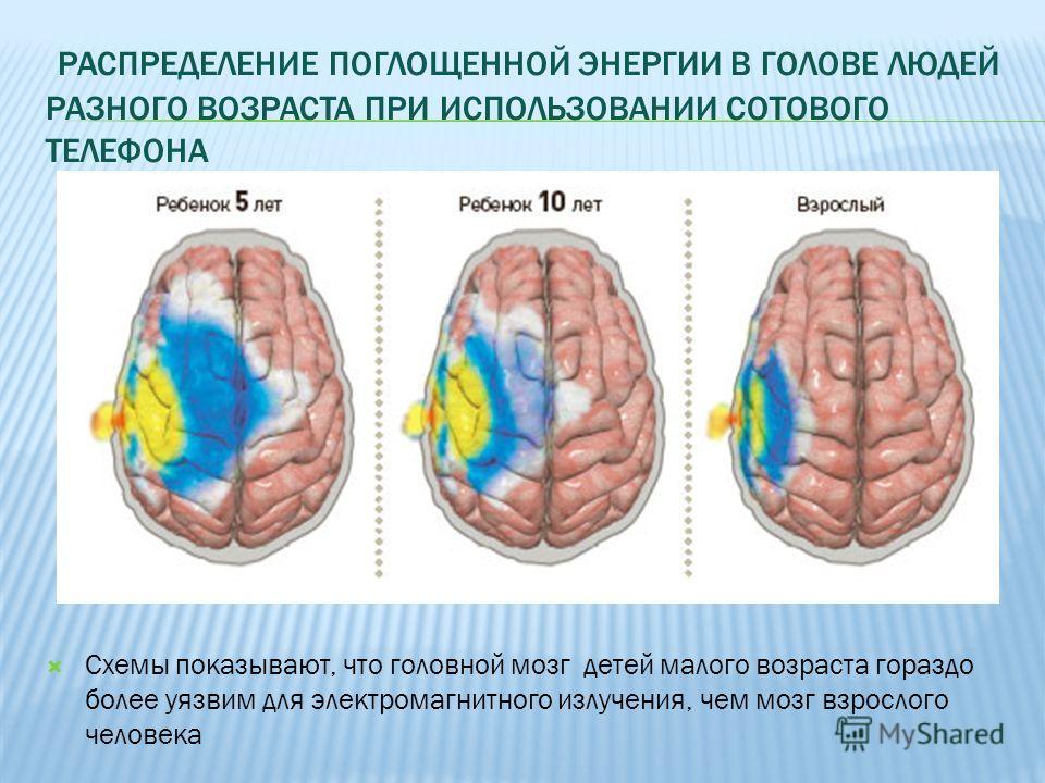 РАСПРЕДЕЛЕНИЕ ПОГЛОЩЕННОЙ ЭНЕРГИИ В ГОЛОВЕ ЛЮДЕЙ РАЗНОГО ВОЗРАСТА ПРИ ИСПОЛЬЗОВАНИИ СОТОВОГО ТЕЛЕФОНА Схемы показывают, что головной мозг детей малого возраста гораздо более уязвим для электромагнитного излучения, чем мозг взрослого человека