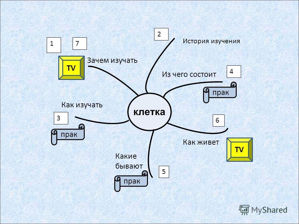 Из чего состоит Как живет Какие бывают Как изучать Зачем изучать 1 4 5 6 3 2 прак TV История изучения 7