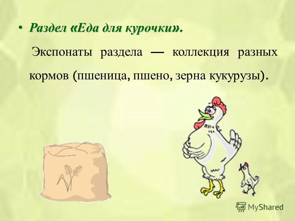 Раздел « Еда для курочки ».Раздел « Еда для курочки ». Экспонаты раздела коллекция разных кормов ( пшеница, пшено, зерна кукурузы ).