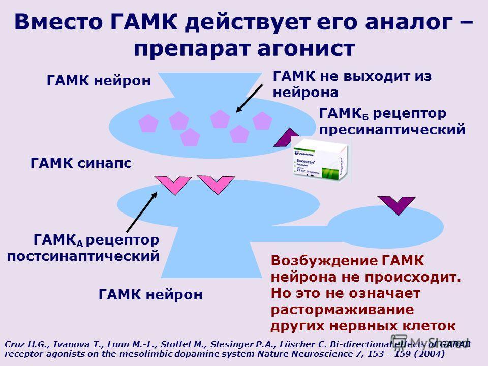 ГАМК нейрон Вместо ГАМК действует его аналог – препарат агонист ГАМК синапс ГАМК нейрон ГАМК Б рецептор пресинаптический ГАМК А рецептор постсинаптический Возбуждение ГАМК нейрона не происходит. Но это не означает растормаживание других нервных клето
